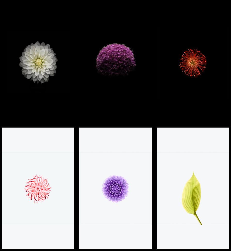 有 150 张原生壁纸随 iOS 升级而消失,我们挑选了最经典的 42 张