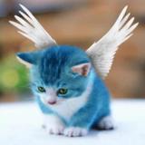 当猫飞的时候
