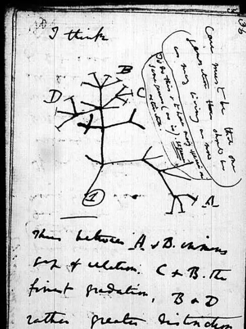 达尔文手稿