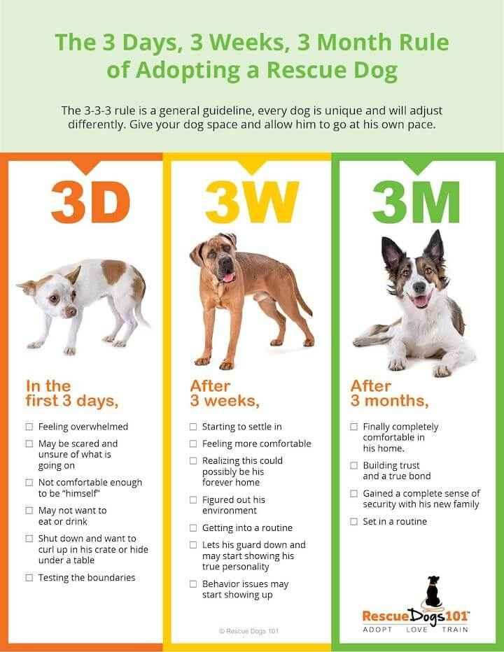 The 3-3-3 rule for adopting a new dog